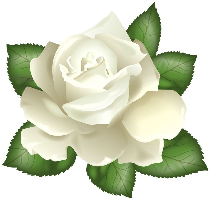 429 best clip art rose images on pinterest clip art rh pinterest co uk white rose clip art images black white rose clipart