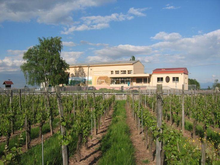 Cave vinicole du Vieil Armand - Wuenheim - #Alsace