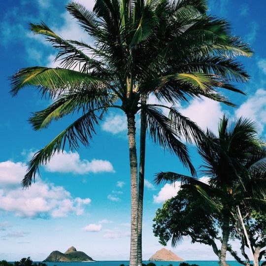 468 Best Palm Trees Images On Pinterest
