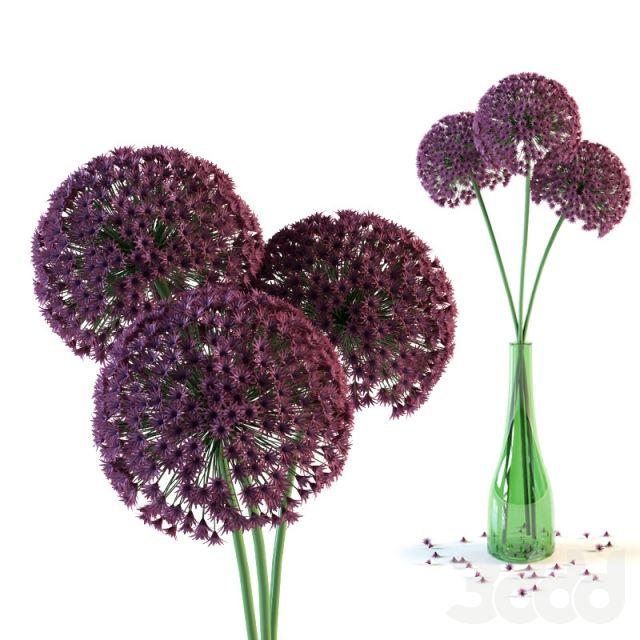 Цветы гигантского лука