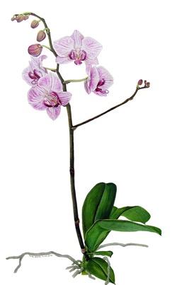 171 Best Images About Arte Flores Orchid On Pinterest