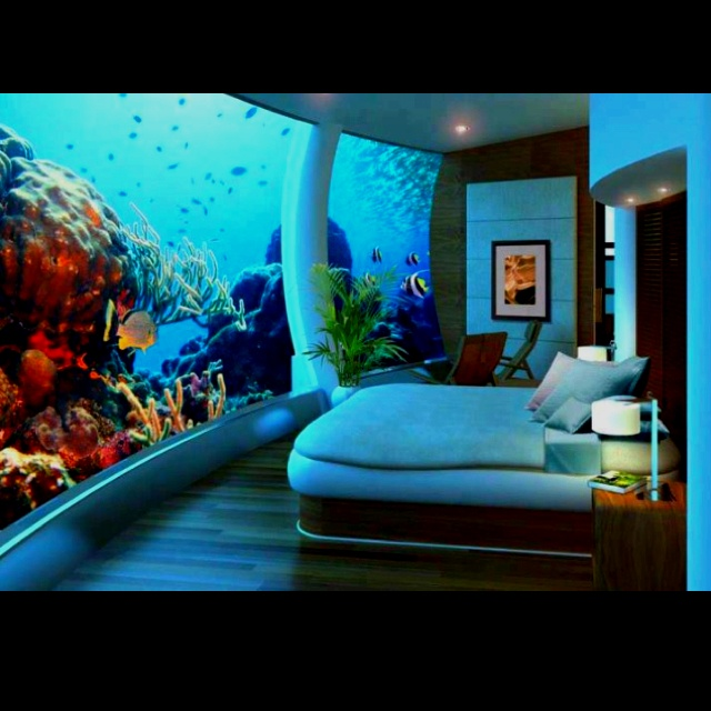 Fish tank wall!! My biggest childhood dream, hopefully one day part of my master bedroom.