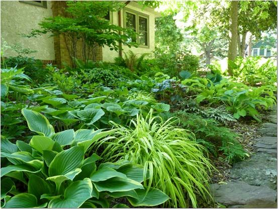Imagining a no-mow yard: 7 lawn alternatives in pictures — Timber Press Talks