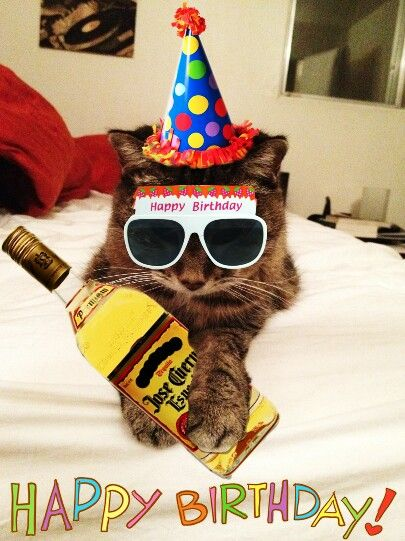 Happy Birthday Weirdo Quotes: 17 Best Images About Cats/Birthday Wishes On Pinterest
