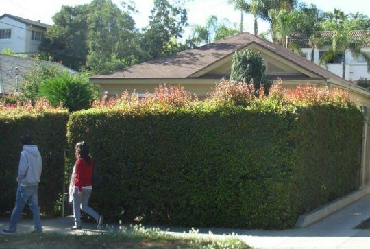 50 best images about Drought-Tolerant Hedge Ideas on ...