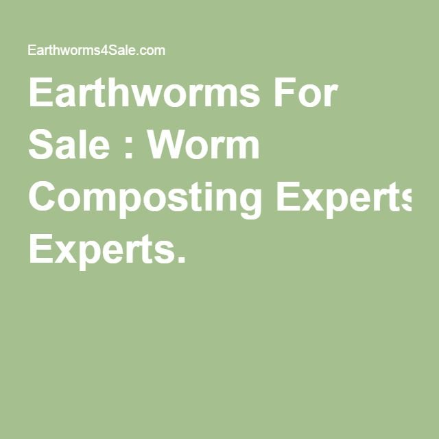 12 best fish bait images on pinterest bait fish and pisces for Fishing worms for sale