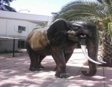 African Elephant Statue