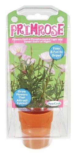 Primrose Capsule Terrarium Kit w/Seeds