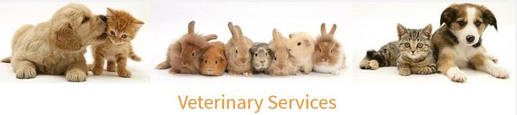Sandycove Veterinary Clinic, one of the most reputed vet clinics, provides quick and dependable solutions for vetinary emergencies in Dublin. They have appointed the best veterinary surgeons of Blackrock who provide the best possible pet care.