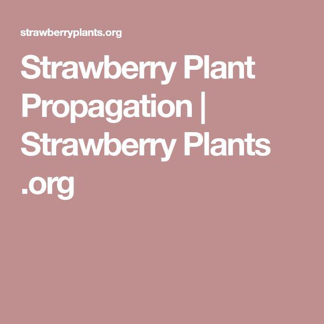 Strawberry Plant Propagation | Strawberry Plants .org