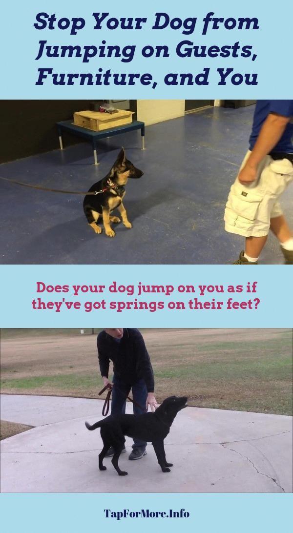 Stop Dog Jumping And Aggressive Dog Check Pin For Various Dog