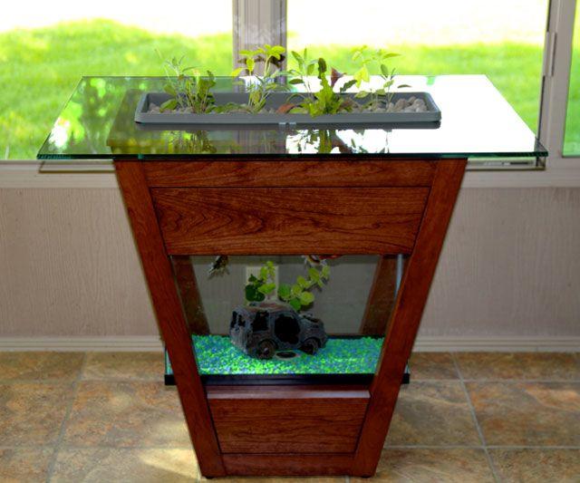 17 best images about aquaponics on pinterest coming soon for Aquaponics aquarium