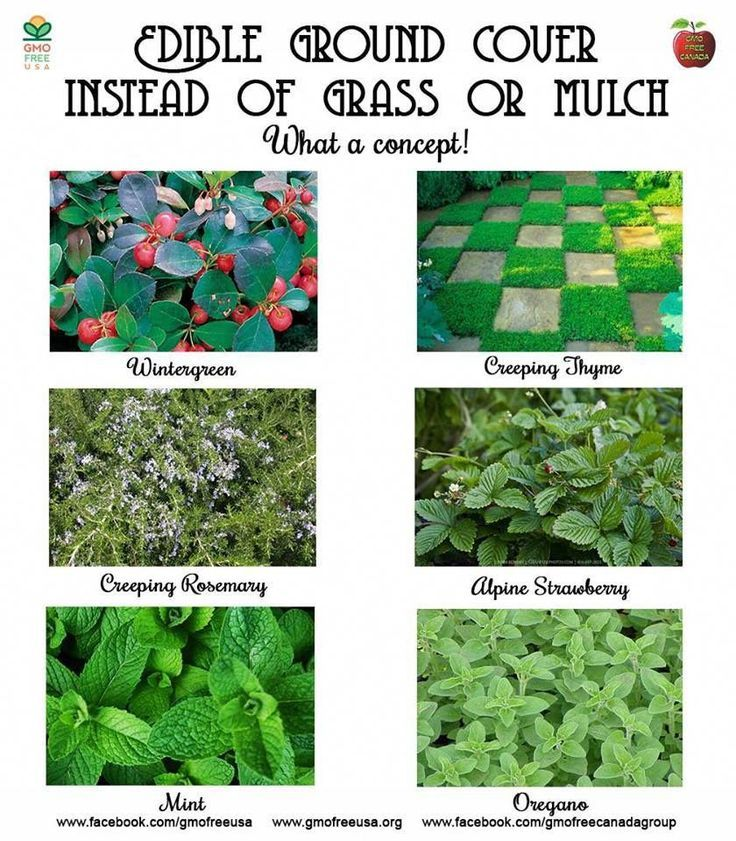 A great alternative to grass or mulch that you may not have considered  plant an…