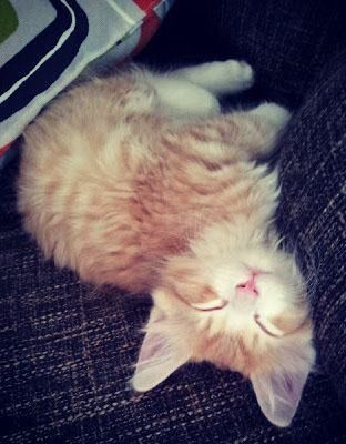 Kittens anus stickin out