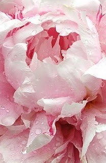 Pink Pins For Pinterest