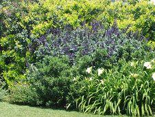 Paisajista laila huber rboles nativos prosopis caldenia for Jardineria paisajista