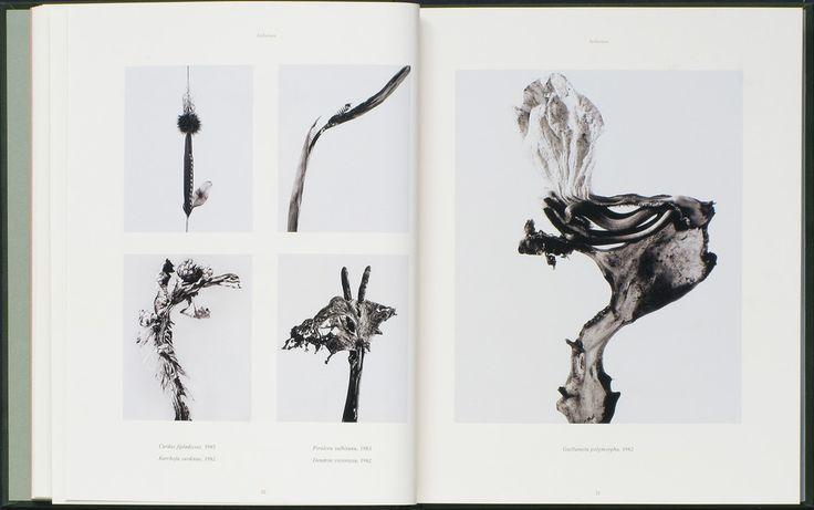 FONTCUBERTA, JOAN : The Photography of Nature & The Nature of Photography.