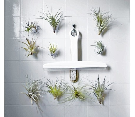 These suction air plants are perfect for the bathroom with totally no maintenance. The plants are mounted tab that inserts into the cup. Easy care instructions are included. $12.95