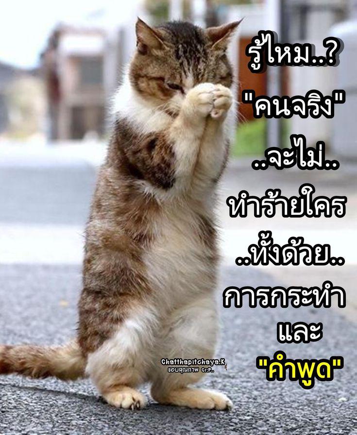 ป กพ นโดย Varu Jung ใน คำคม ล กแมว แมวตลก แมว