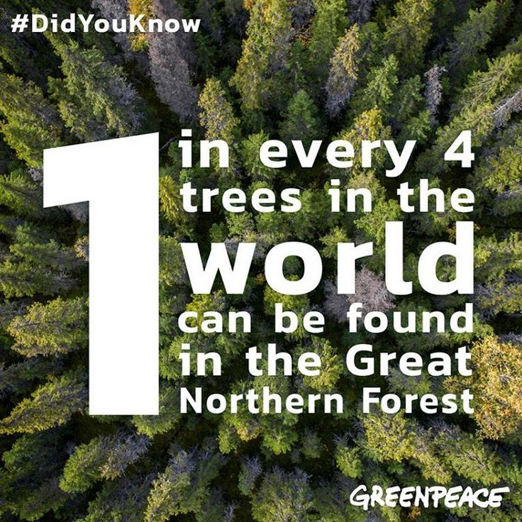 The Great Northern Forest is an ancient boreal forest that stretches from Alaska through Canada and Scandinavia, all the way to Russia. It stores more carbon than all tropical rainforests combined and is critical to prevent climate change. However, it is under threat by industrial scale logging and fires. Protecting the Great Northern Forest is protecting all life on earth: www.greatnorthernforest.org  Photo credit: © Christian Åslund / Greenpeace  #🌲 #greenpeace #greatnorthernforest…