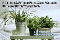 Si vous êtes à la recherche d'une option naturelle et moins chère, ces 6 plantes sont idéales pour votre maison :-) Découvrez l'astuce ici : http://www.comment-economiser.fr/6-plantes-a-cultiver-dans-votre-chambre-pour-ameliorer-sante.html?utm_content=buffer78b86&utm_medium=social&utm_source=pinterest.com&utm_campaign=buffer