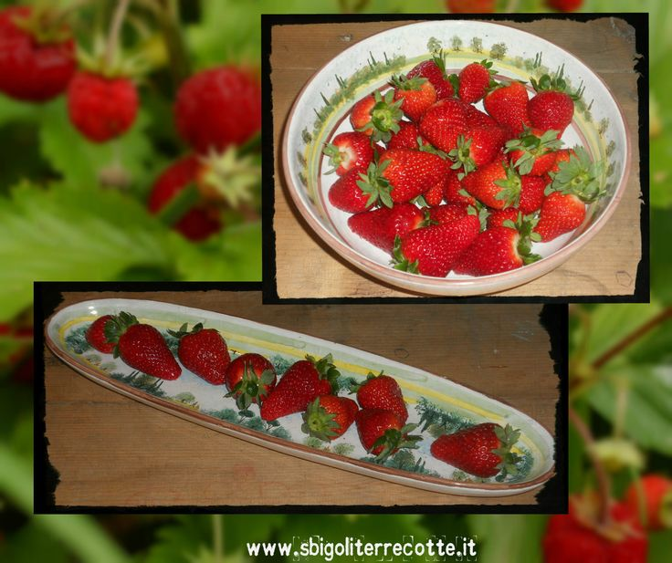Strawberries in Tuscany - www.sbigoliterrecotte.it