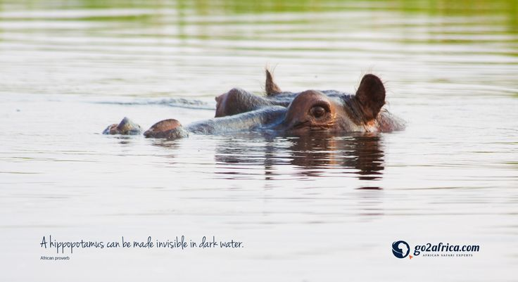 'A hippopotamus can be made invisible in dark water.' Click here for downloadable #inspirational #wallpapers: HD desktop: https://imglib_g2a.s3.amazonaws.com/img/20150105_023018_3_1.jpg iPad tablet: https://imglib_g2a.s3.amazonaws.com/img/20150105_023104_3_1.jpg