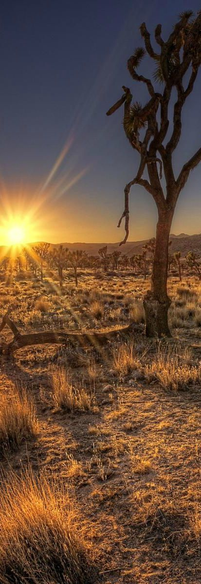 Beautiful Arizona desert sunset // Larry Miller Scottsdale