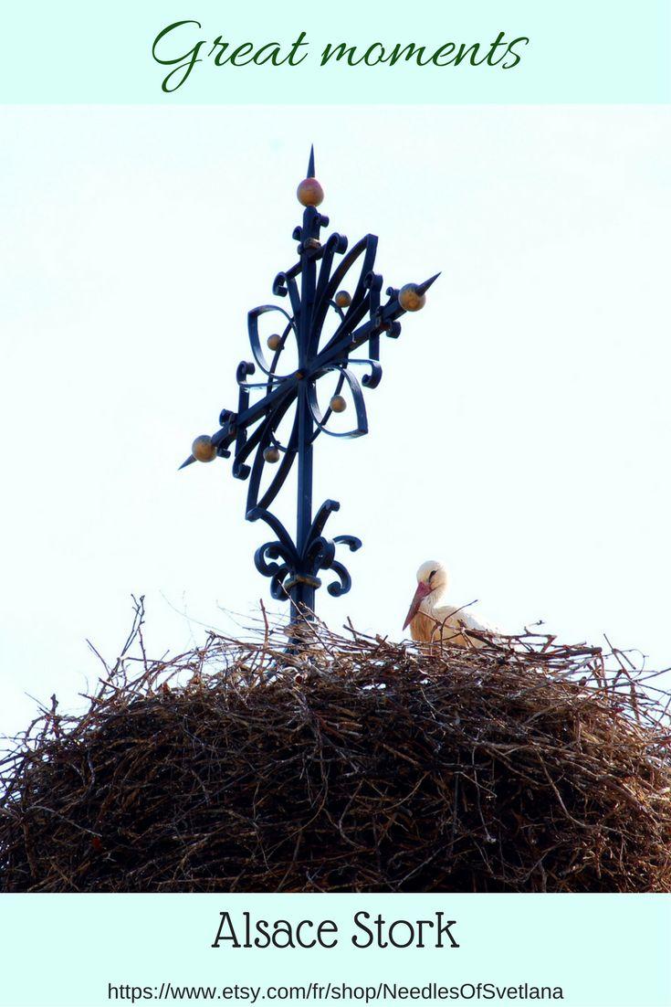 $6 Alsace stork birds photo