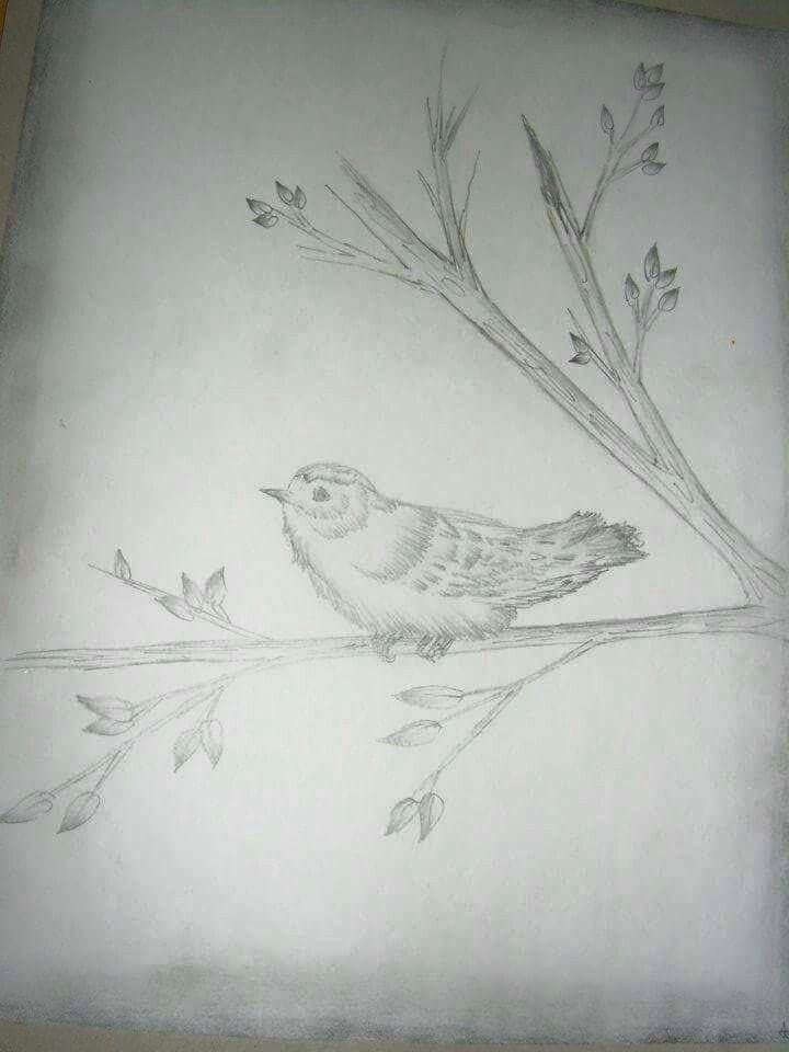 Chickadee pencil drawing