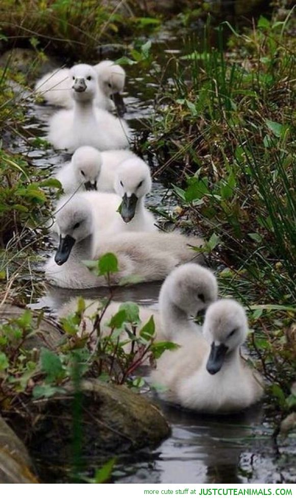 Cygnet Race...go with the flow and take the flow with friends in tow.