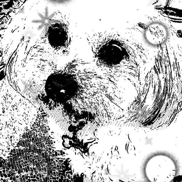 Snowでww  #ポメプー #ポメラニアン #プードル #オス #ラミ #愛犬 #あまえんぼ #可愛い #もふもふ #ミックス犬 #ハーフ犬 #20140531 #2歳 #癒し #親バカ #滋賀から来た #ブリーダーは毛芝さん #パテラ