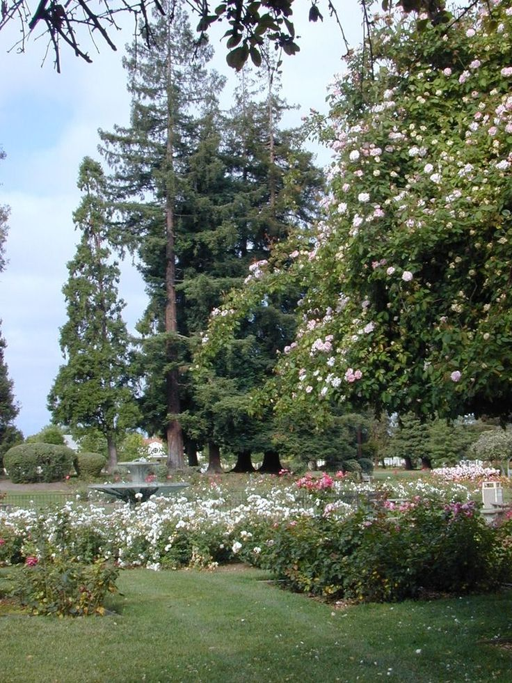 34 Best San Jose Municipal Rose Garden Images On Pinterest Garden Roses Roses Garden And