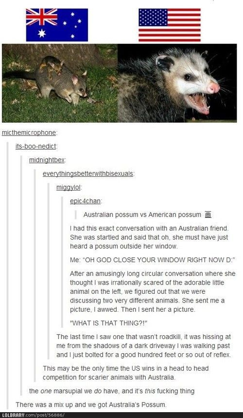 Possum: Cute or deadly?