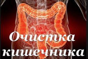 «Генеральную уборку организма» нужно начинать с пищеварительного тракта. И вот почему. Дело в том, что в толстом кишечнике постоянно оседают не переварившиеся остатки пищи и лежат там мертвым грузом, отравляя организм и провоцируя развитие самых разных болячек, начиная с ожирения и отложения солей и заканчивая сердечно-сосудистыми и онкологическими заболеваниями. Увеличившаяся в размерах толстая кишка давит на печень и почки, поджимает …