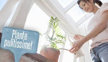 Insetticida naturale: come farlo in casa con il sapone di Marsiglia   Giardinieri in affitto