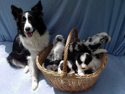 Yes, I would like puppies in a basket