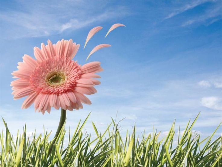 Η ιστορία της Αλλεργιολογίας