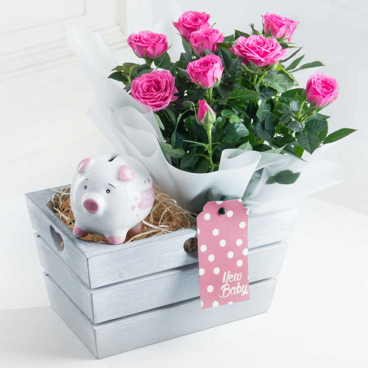 New Baby Girl Gift Set - Complete with pink rose plant and pink piggy bank, this charming gift set is a perfect way to welcome the new arrival.