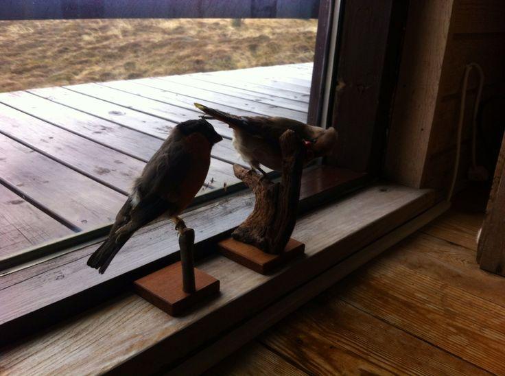 Fugle i sommerhuset.