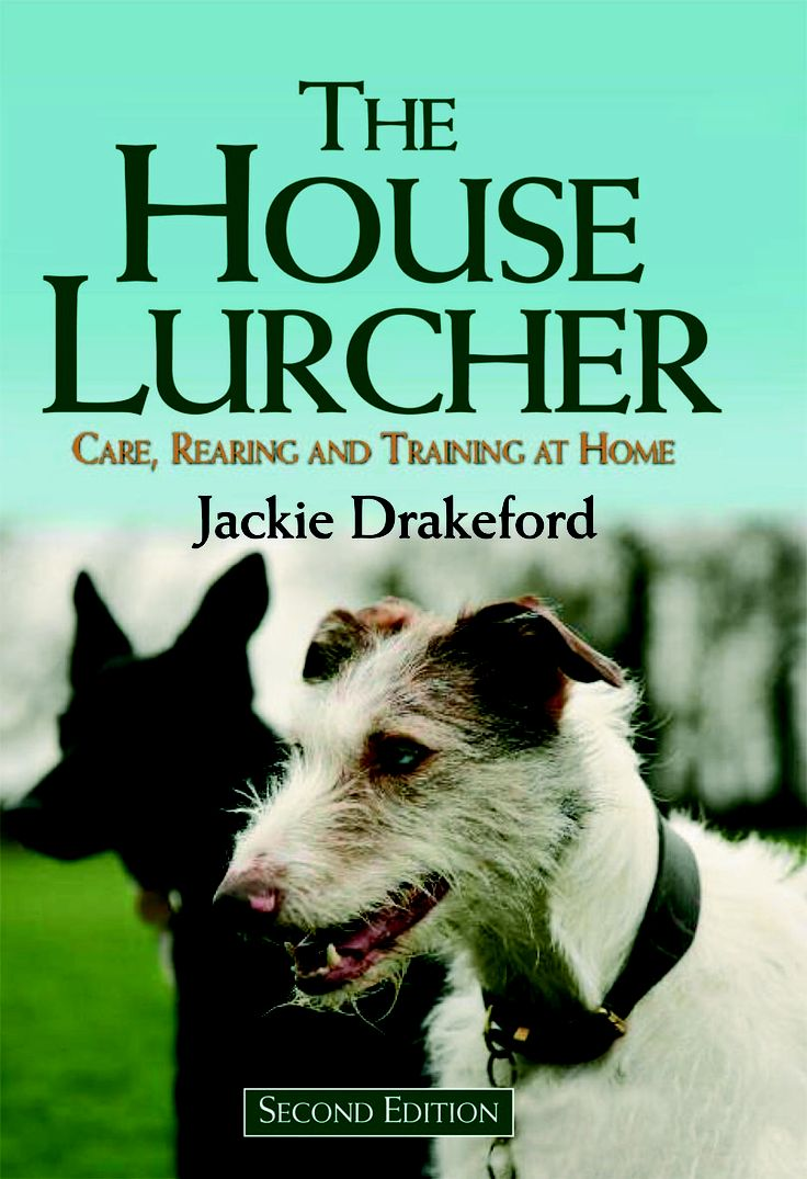 The House Lurcher by Jackie Drakeford | Quiller Publishing. As a result of many training enquiries received over the years, Jackie Drakeford has written this for owners of pet lurchers and domestic greyhounds. it details the historical origins of the Lurcher, how to choose the right Lurcher for you, the vital link between feeding, health and behaviour as a puppy and adult, training for happy co-existence within the home and outdoors, how to conquer separation anxiety and more. #dog #lurcher