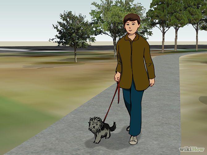 Pick Up Dog Poop Step 1.jpg