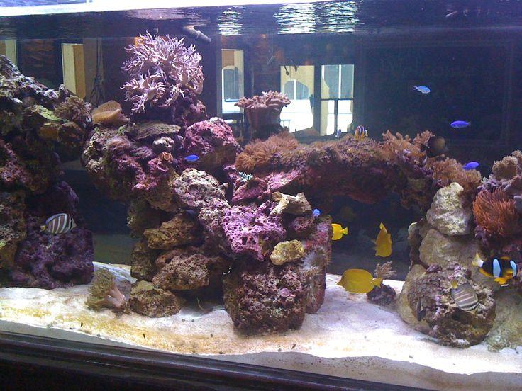 Salt Water Aquarium Utah Marine Aquarium Society Utmas