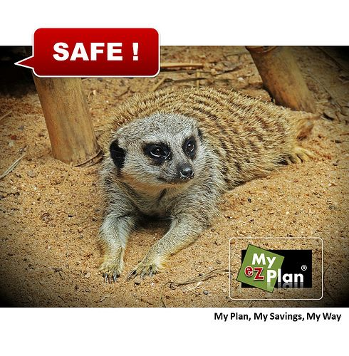 Put the F on Fun ! Laughable Animal | Live your vacations the way you want. Go to myezplan.com -  | Hallowed Ground | Excursions in Victoria  in Canada #cute #pets #naturelover #farm #animallovers