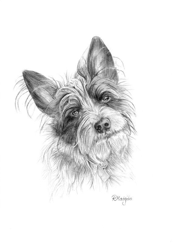 Custom Pet Portrait - Original Graphite Pencil Drawing - Graphite Art Studio - Wall decor - Picture - Illustration
