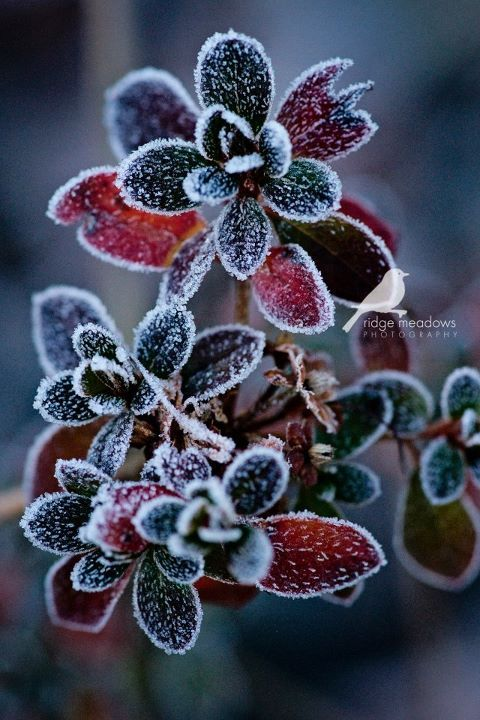 Beautifully frosted