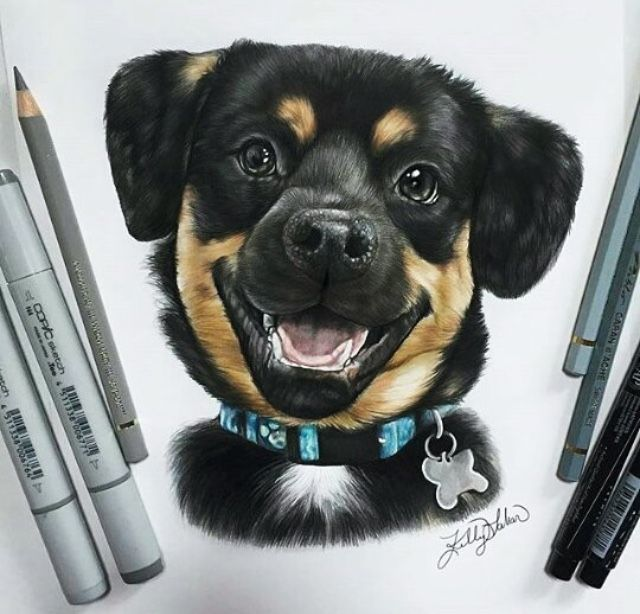 German Rottweiler Breeders Rottweiler Puppies For Sale Rottweiler Puppies Rottweiler Puppies For Sale Dog Breeds
