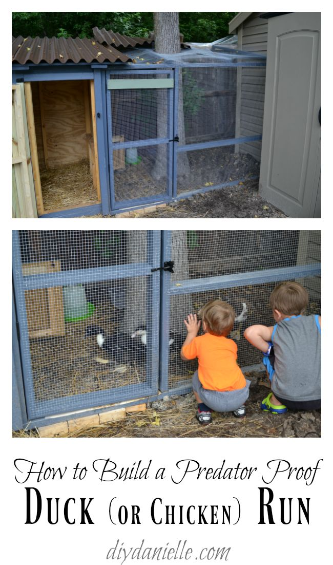 686 best images about on pinterest for Duck houses and runs