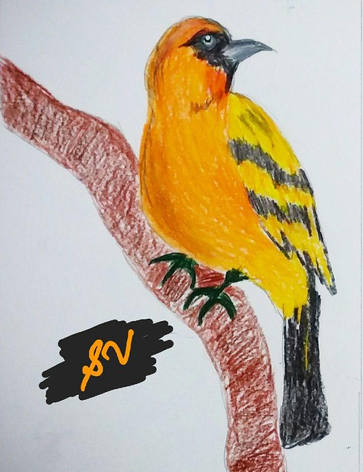 Pencil colour drawing Prisma colors Birds  Yellow/ orange