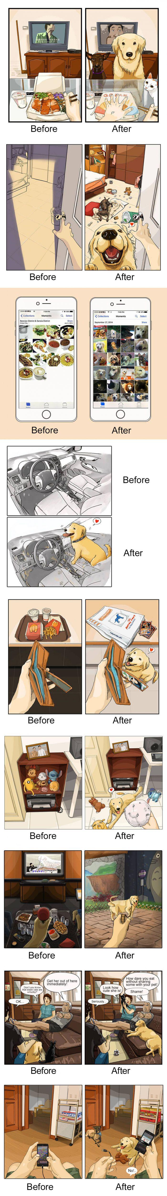 La vida antes y después de tener un perro.